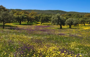 Thumbnail for Top Reasons to enjoy Spring in Malaga
