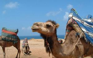 Thumbnail for Full-day Family-friendly Tangier, Morocco Tour