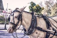 Thumbnail for Spend a Day with Majestic Horses in Malaga